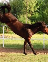 Hipologia (Segredos da relação homem x cavalo)