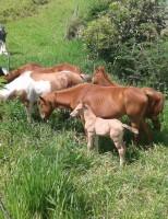 Os cuidados para o pasto que o cavalo deve consumir