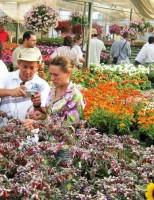 Curso sobre cultivo de flores pode ser feito à distância