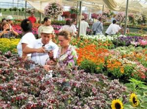 Flores Sanar