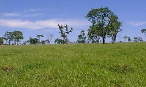 """<h2><a href=""""http://nordesterural.com.br/vedar-cercados-na-propriedade-facilita-a-formacao-do-feno-em-pe/"""">Vedar cercados na propriedade facilita a formação do Feno-em-pé</a></h2>Uma alternativa para suprir a necessidade de pasto dos animais na época seca é a conservação de forragem na forma de feno-em-pé. Esta técnica tem se mostrado promissora, por ser"""