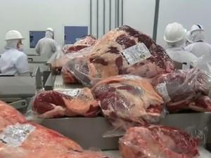 carne exportação