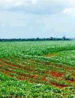 Otimismo para o setor de produção da soja brasileira