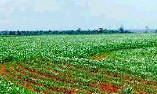 """<h2><a href=""""http://nordesterural.com.br/otimismo-para-o-setor-de-producao-da-soja-brasileira/"""">Otimismo para o setor de produção da soja brasileira</a></h2>"""