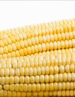 Milho tem preço garantido pelo Governo