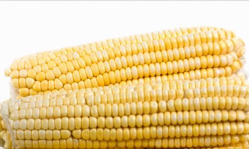 """<h2><a href=""""http://nordesterural.com.br/milho-tem-preco-garantido-pelo-governo/"""">Milho tem preço garantido pelo Governo</a></h2>  Nas praças em que o valor de mercado do milho estiver abaixo do preço mínimo, o produtor poderá procurar a Companhia Nacional de Abastecimento – Conab - para fazer a"""