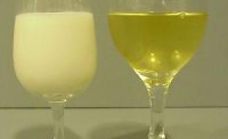 O vinho na terra do leite