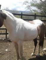 Brasil vai criar normas regulamentadas para importação de cavalos