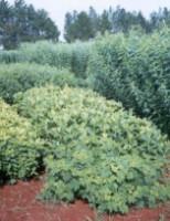 Um tipo de adubação para melhorar a qualidade dos plantios
