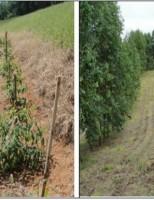 A formação de uma floresta que pode ser usada para geração de renda do agricultor