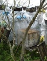 Agricultores do semiárido pernambucano recebem kit para apicultura