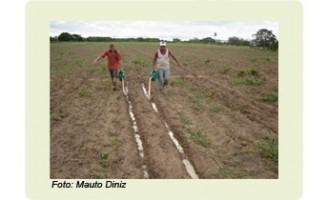 A horticultura orgânica já pode usar a manipueira como adubo ou para combater pragas