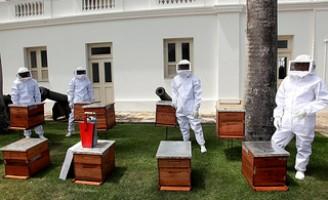 Agricultores do sertão pernambucano recebem kits para produzir mel