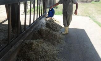 Economia na hora de alimentar o gado em períodos de estiagem