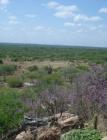 Trabalho técnico científico para preservar a caatinga brasileira