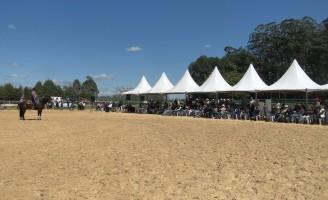 Abertas as inscrições para o I Congresso de Equinocultura da Universidade do Cavalo