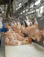 Cresce a opção do mercado consumidor por produtos livres de antibióticos
