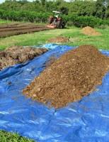 A importância do uso do esterco bovino para recuperar solos degradados