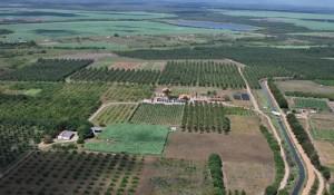 irrigação frutas