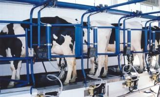 Cuidados na produção de leite: garantia de um alimento seguro