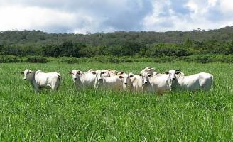 Dicas para evitar a degradação das pastagens ajudam a melhorar a renda do produtor