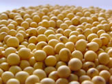 grãos 2