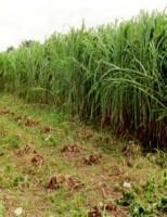 Tecnologia ajuda a recuperação de pastagens e adubação de lavouras