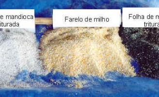 A ração para alimentar a galinha caipira pode ser enriquecida com uso da mandioca