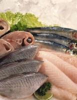 Cuidados com o manejo correto na pesca e conservação garantem a qualidade do peixe