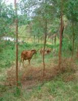 O produtor rural pode ganhar mais conservando árvores na propriedade