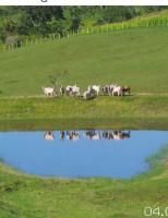 Um espelho d'agua num paraíso verde