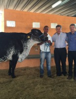 Raça Girolando do Brasil tem vaca recordista mundial