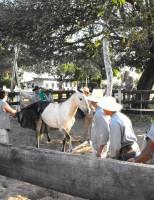 Manual orienta sobre o bem-estar animal em competições equestres