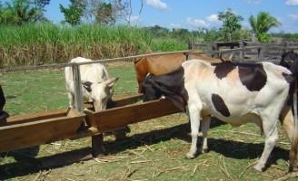 Mistura múltipla é alternativa para alimentar o rebanho na estação seca