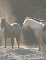 O nordeste é o segundo maior criador de cavalos do Brasil