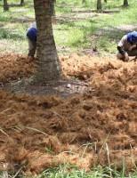Adubação com compostagem laminar é melhor do que adubação química