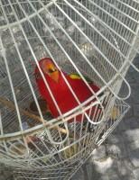 Pássaros exóticos serão tema de exposição no Ceará
