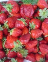 Morango ganha projeto especial para orientar o controle de uso de agrotóxicos