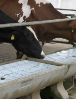A importância da qualidade da água para o consumo dos animais