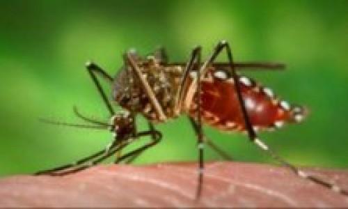 """<h2><a href=""""http://nordesterural.com.br/produtor-rural-precisa-redobrar-os-cuidados-com-o-mosquito-aedes-aegypti/"""">Produtor rural precisa redobrar os cuidados com o mosquito Aedes aegypti</a></h2>Os agricultores devem adotar medidas preventivas e ficarem atentos para os possíveis focos do Aedes aegypti em suas propriedades. O objetivo é diminuir a proliferação do mosquito. Nesse caso, a"""
