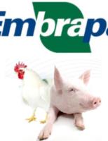 Americanos dizem que o Brasil será destaque na produção de aves e suínos