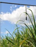 Cana de açúcar irrigada e adubada tem maior produtividade no Cerrado