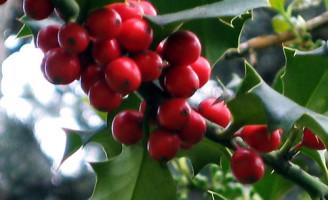 Relatório aponta um crescimento para o consumo mundial de café