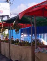Consumidores de Maceió serão orientados por nutricionistas em feiras orgânicas