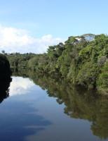 Florestal brasileiras são estudadas por pesquisadores da Embrapa
