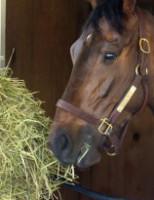 O cavalo de vaquejada exige atenção especial com a alimentação