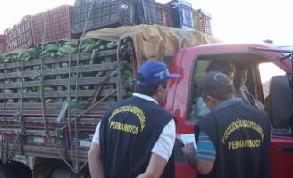 Pernambuco reforça fiscalização para tentar evitar a entrada da Sigatoka Negra nas plantações de banana