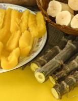 Novas variedades de mandioca já estão no mercado para uso do agricultor