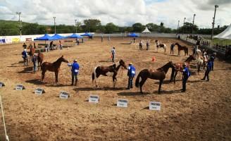 Festa do Cavalo termina neste domingo em Gravatá
