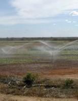 A importância da irrigação para a agricultura brasileira